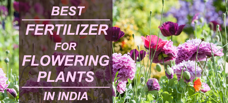 Best Fertilizer for Flowering Plants in India