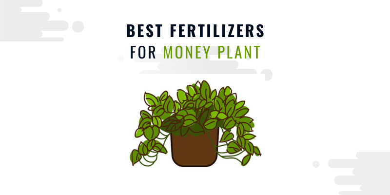 BEST FERTILIZERS foR money plant